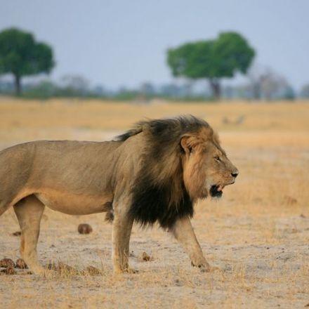 Shut up about Cecil the Lion, please