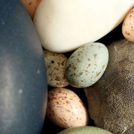 Birds Got Their Colorful, Speckled Eggs From Dinosaurs
