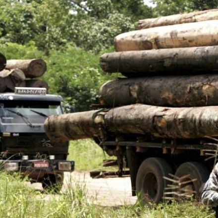 Brazil backs 'Guardians of the Amazon' in their war on loggers