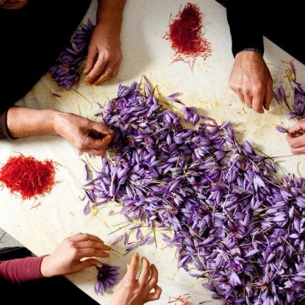 An Intimate Look at Italy's Saffron Harvest