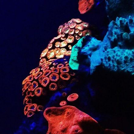 Glide Through the Mysterious Glowing Coral Deep in the Red Sea (Video)