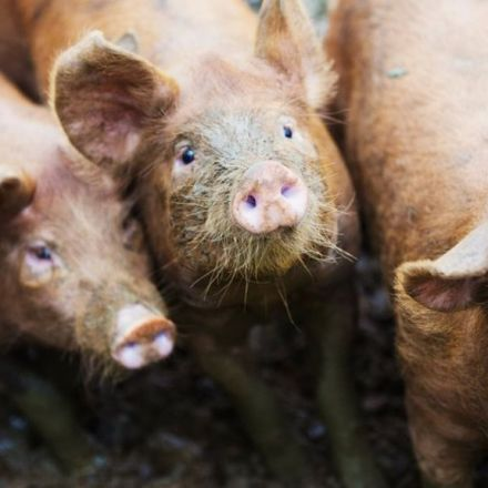 CCTV to be compulsory in all abattoirs in England