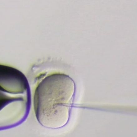 First human embryos edited in U.S., using CRISPR