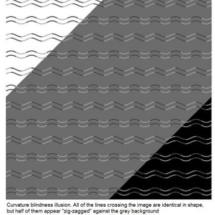 "The Remarkable ""Curvature Blindness"" Illusion"