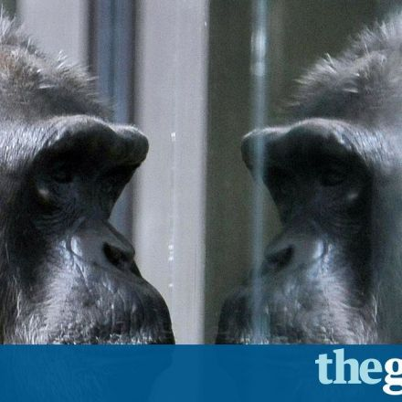 Apes can guess what others are thinking - just like humans, study finds