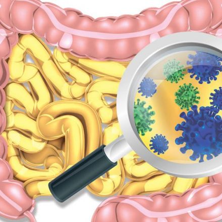 Antibacterial Ingredient Can Really Quickly Mess With Gut Bacteria, Study Finds