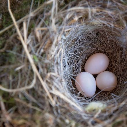 A surprisingly simple explanation for the shape of bird eggs