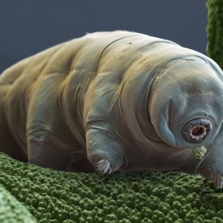 Secrets of the world's toughest creatures revealed -