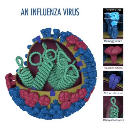 Flu survives immune onslaught better in low humidity