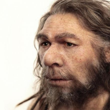 Neanderthals Used Plant-Based Painkillers, Ate Rhinoceros Meat, Mushrooms, Nuts, and Moss