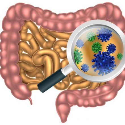 A Dietary Fiber-Deprived Gut Microbiota Degrades the Colonic Mucus Barrier