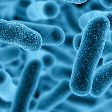 Gut Bacteria and IBS