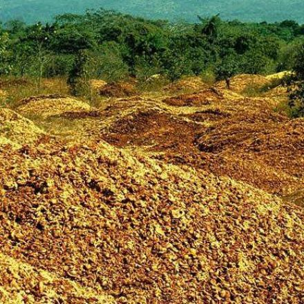 How 12,000 Tonnes of Dumped Orange Peel Grew Into a Landscape Nobody Expected to Find