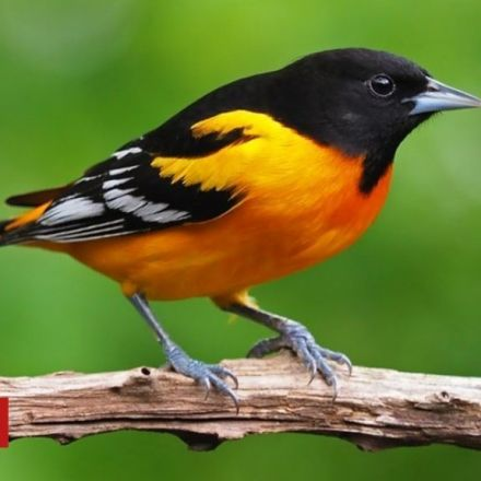 US and Canada lose 3bn birds in 50 years