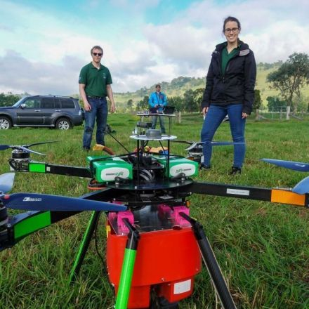 The ambitious plan to plant nearly 100,000 trees a day with drones