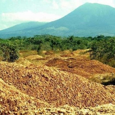 Juice Company Dumped Orange Peels In A Deforested Area - Here's What It Looks Like After 16 Years