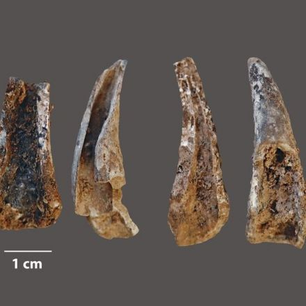 Neanderthals Feasted on Seafood, Seabirds, Perhaps Even Dolphins