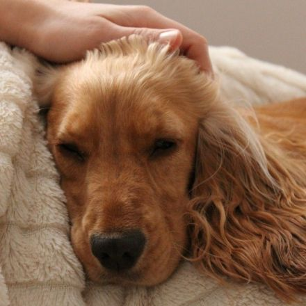 Letting your dog sleep with you is good for chronic pain sufferers, new study shows