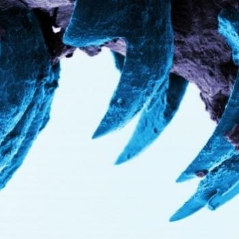 Limpet teeth are strongest natural material known