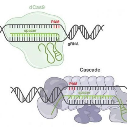 New CRISPR Class Expands Genetic Engineering Toolbox
