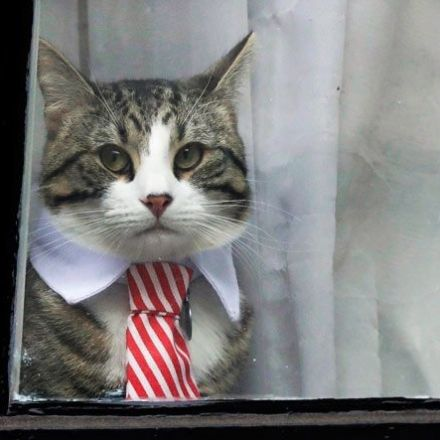 Julian Assange's cat: A brief history
