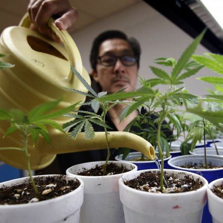 Legal marijuana is saving lives in Colorado, study finds