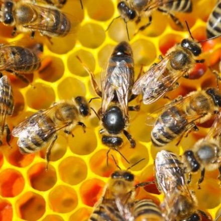 While We Worry About Honeybees, Other Pollinators Are Disappearing