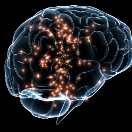 Neuroscientists call for more comprehensive view of how brain forms memories