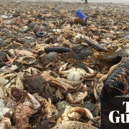 Mass die-off of sea creatures follows freezing UK weather