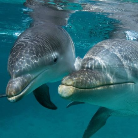 Humans Are Screwing Up Dolphins' Abilities To Talk To Each Other