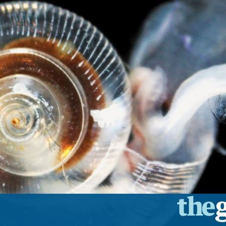 Ocean acidification is deadly threat to marine life, finds eight-year study